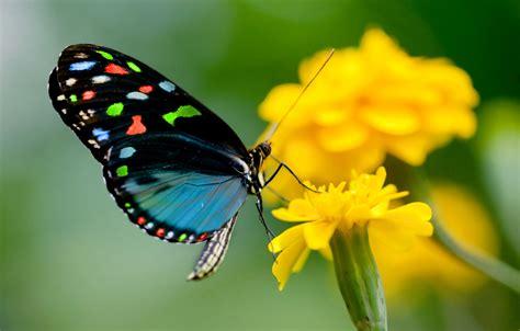 beautiful butterfly wallpaper hd wallpapers