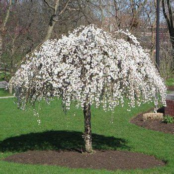 best ornamental trees flowering trees small ornamental trees perfect for your area fast growing trees garden