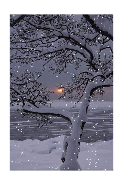 Winter Solstice Wonderland Snow December Tree Today