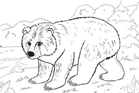 disegno  orso bruno da colorare disegni da colorare