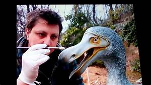 Dodo Birds May Not Be Extinct After All New 2018 Info