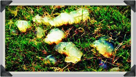 belle effect  oakville blob