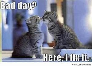 Pics For > Bad Day Quotes Funny