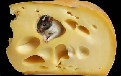 Cheese Mouse Wallpapers Animals