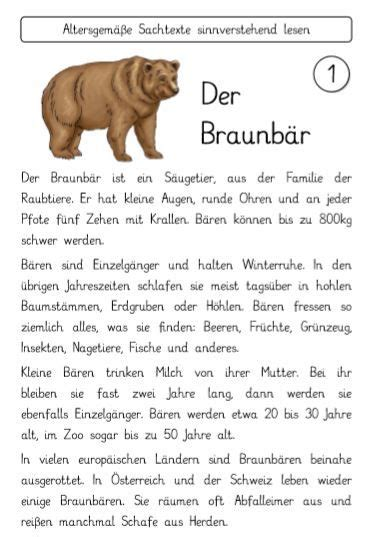 Klasse • deutsch, mathe, englisch, hsu • vollständige und. Sachtexte Bären und Beeren   Deutsche bücher, Lesen üben, Deutsch lesen
