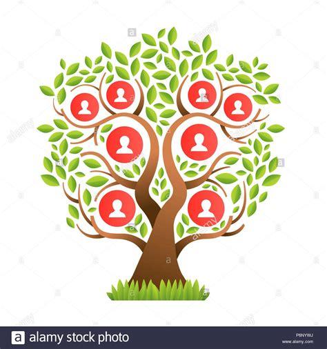 family tree genealogy vector stock  family tree