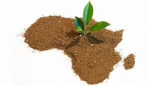 L'extraordinaire potentiel de l'agriculture africaine