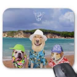 Funny Dog On Beach