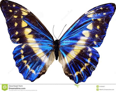 Butterflies And Moths History And Some Interesting Facts