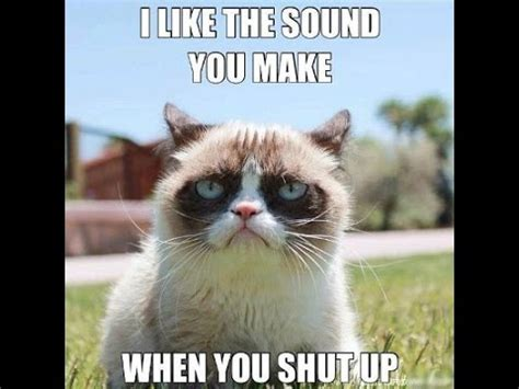 Try Not To Laugh Grumpy Cat 2 Youtube