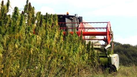 Industrial hemp farming legalized in NC | Public Radio East