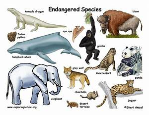 Endangered Species Wallpaper | High Definition Wallpapers ...