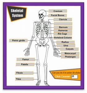 FUN ENGLISH POINT: Skeletal System: Label the bones