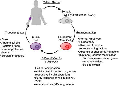 autologous pluripotent stem cellderived   cells