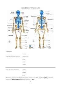 dispense anatomia umana appunti di anatomia medicina e farmacia docsity