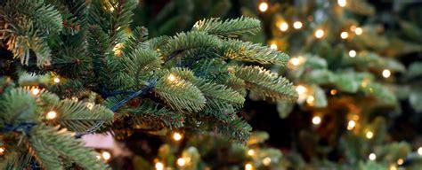 Weihnachtsbaum Lichterkette Anbringen by Bildquelle 169 Chantal De Bruijne