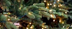 Lichterkette Weihnachtsbaum Anbringen : bildquelle chantal de bruijne ~ Orissabook.com Haus und Dekorationen