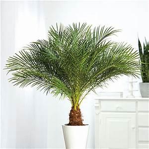 Palmen Für Draußen : palmen verschiedene sorten ~ Michelbontemps.com Haus und Dekorationen