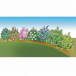 Haie Haute Et Rapide : colis special haie fleurie haute arbustes pour haies meilland richardier ~ Dode.kayakingforconservation.com Idées de Décoration