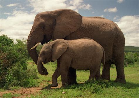 how can an elephant get use feng shui get pregnant elephant journal