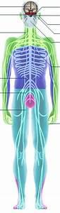 Bbc - Science  U0026 Nature - Human Body And Mind