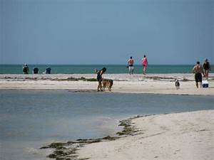 southern pleasures of honeymoon island state park With honeymoon state park florida
