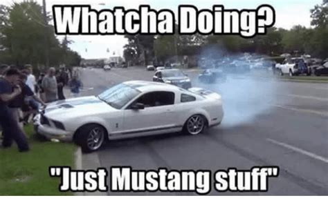 Mustang Memes - whatcha doing p just mustang stuff mustang meme on sizzle