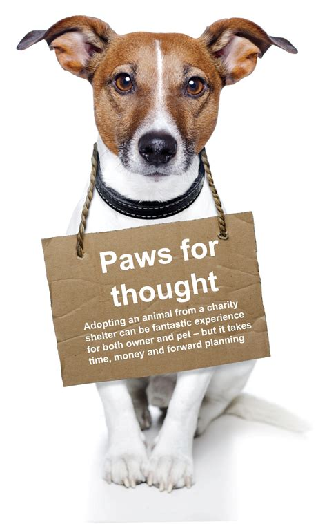 adopt  pet   animal shelter charity choice