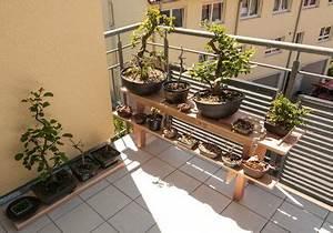 Bäume Für Balkon : bonsai auf einem bonsairegal bonsai b ume pinterest ~ Michelbontemps.com Haus und Dekorationen