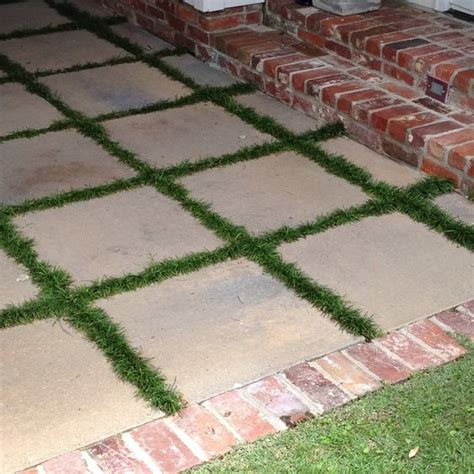 patio area with monkey grass between pavers for the home
