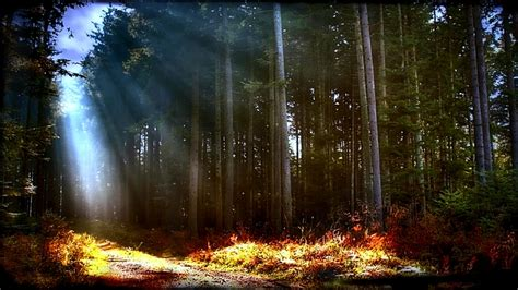 forest grass light  heaven nature forests hd desktop