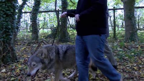 Wolf Encounter Wolf Encounter Natasha Youtube