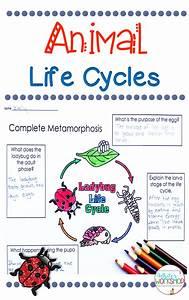 Third Of Life : animal life cycles unit animal life cycles life cycles ~ A.2002-acura-tl-radio.info Haus und Dekorationen