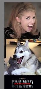 Anna Kendrick Pun Dog | www.pixshark.com - Images ...
