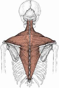 25 Best Muscular Skeletal Disorders Images On Pinterest