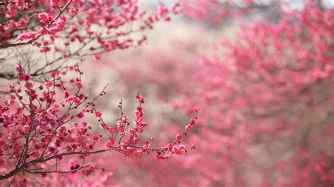 spring  pink desktop pc  mac wallpaper