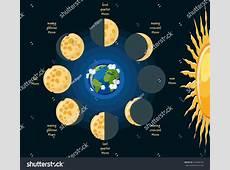 Basic Moon Phases Diagram Cheese Moon Stock Vector