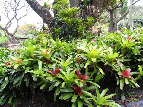 xeriscape plants xeriscape board of water supply