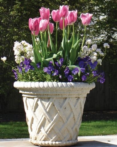 bulb planting ideas 56 best bulb planters images on pinterest bulb container plants and herb garden planter