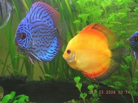 240l aquarium amazonien
