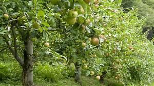 Install Diagram Of Apple Tree Blossom