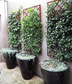 plantas que no esperarias ver en macetas jardins With nice idee amenagement exterieur entree maison 7 plante exterieur en pot en 35 idees deco