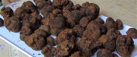 cuisiner les truffes connaître et cuisiner la truffe avignon et provence