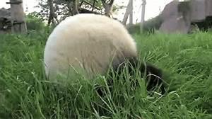 Gif Animé Doigt D Honneur : panda gif find share on giphy ~ Medecine-chirurgie-esthetiques.com Avis de Voitures