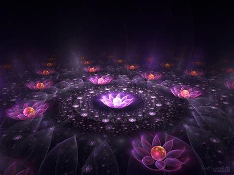 lotus  light fantasy wallpaper  fanpop