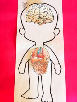 human body systems   senses  kids  kids tpt