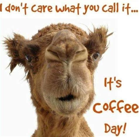 Enjoy these 12 hilarious coffee memes that every coffee lover can relate to! Happy Hump Day 🐪☕☕ in 2020 | Wednesday coffee, Coffee meme, Coffee meme funny