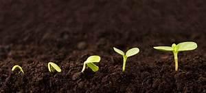 Gartenarbeit Im Februar : gartentipps im februar 7 pflanzen f r den start gr gott ~ Lizthompson.info Haus und Dekorationen