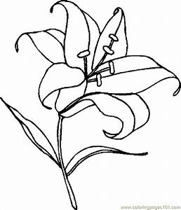 Easter Lily Coloring Pages 5 Best Images Of Printable ...