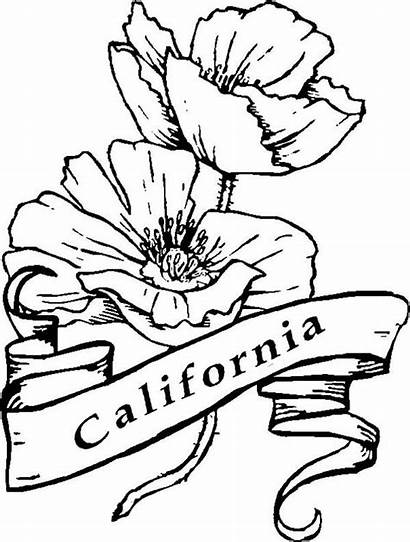 California Coloring Pages Poppy State Symbols Nature